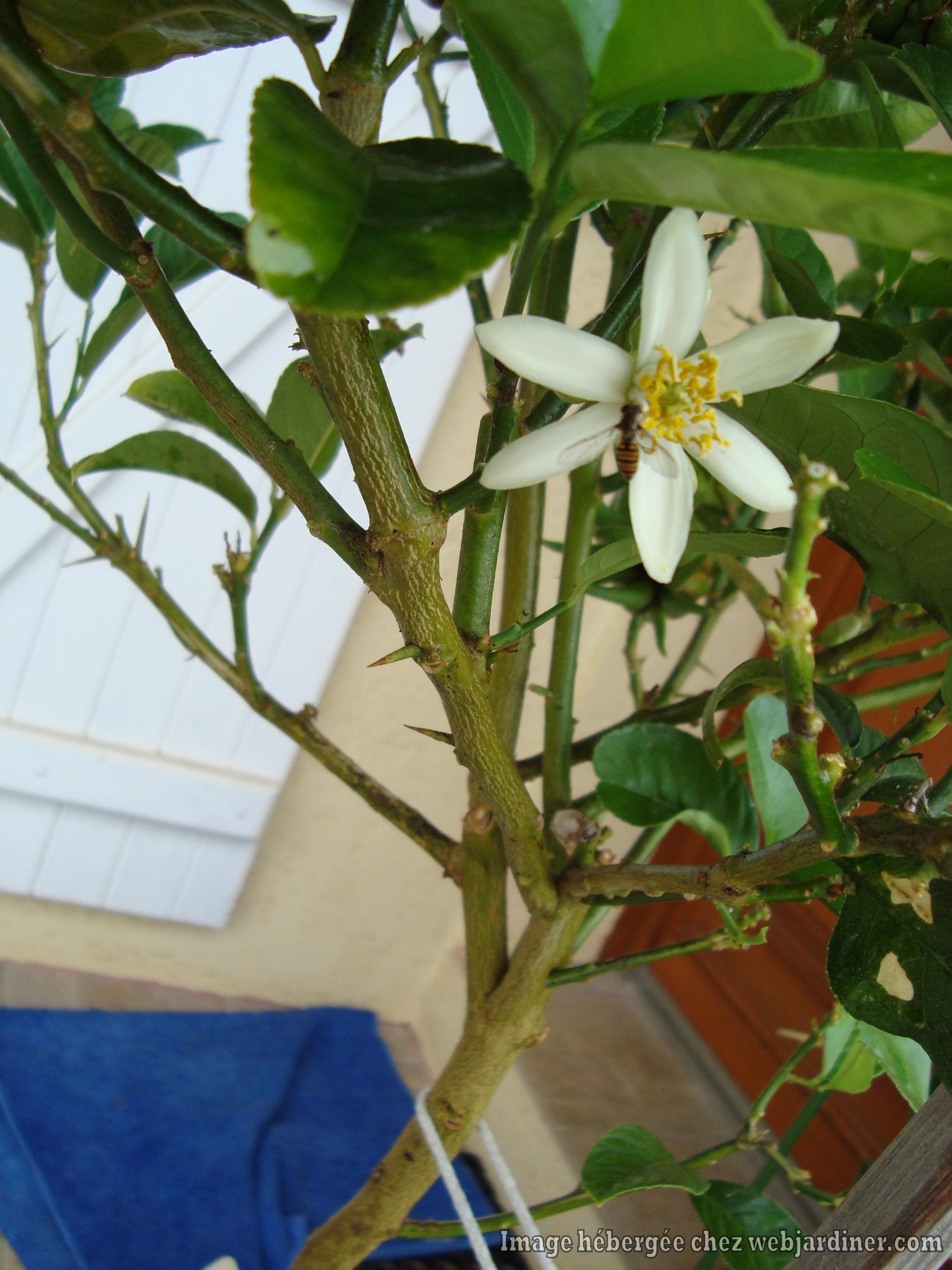 fleurs-maindeBoudha.jpg