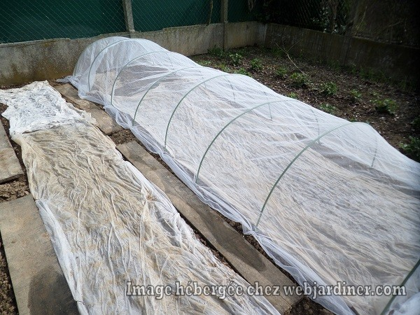 champignons013.jpg