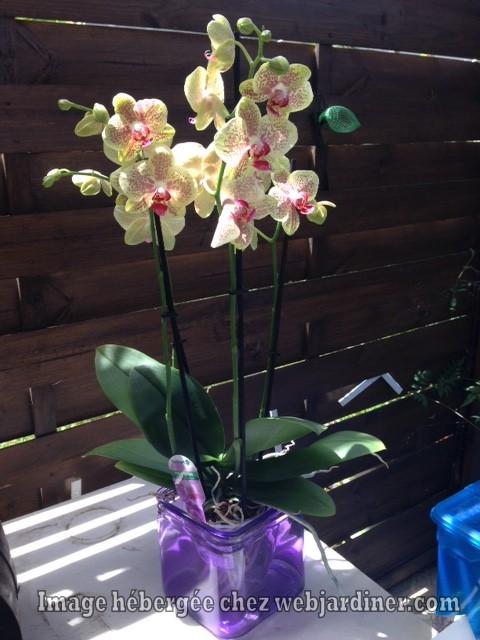 orchidee-22-5-17.jpg