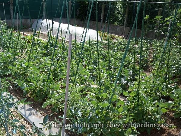 jardinwebjardiner060016.jpg