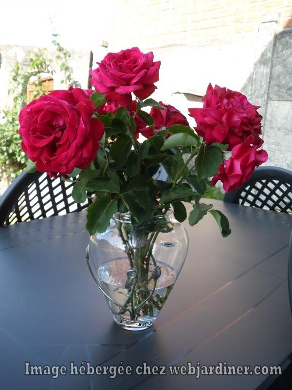 rosesforum001.jpg