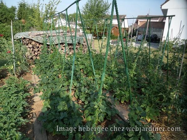 jardinforum21juin007.jpg