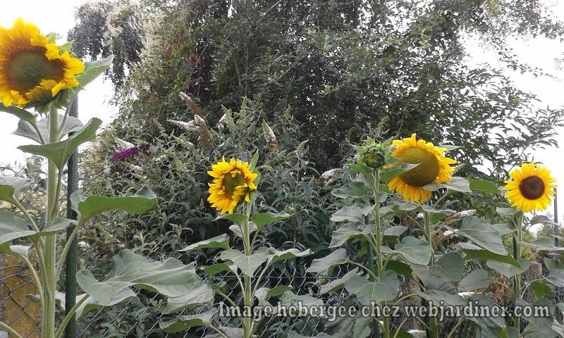 jardinjuillet2017022.jpg