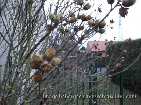 DSCF3413_web.jpgarbre-en-hiver.jpg