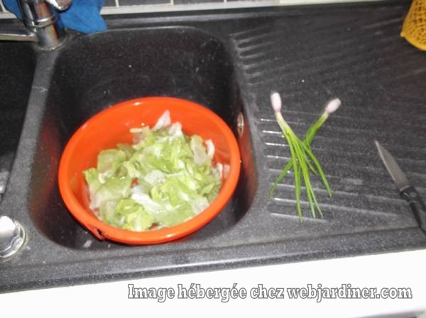 DSCF3433_web.jpgechalotes-et-salades.jpg